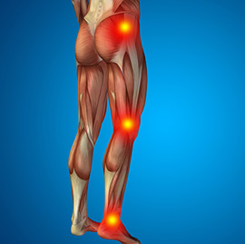 Muscle Activation Movements